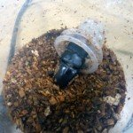 昆虫飼育は文化だ