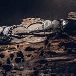 【Dorcus Titanus Palawanicus Specimens】クワカブジオラマ写真コンテスト:エントリーNO15