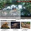 diorama-entry-2016%e4%bb%ae1