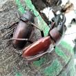 エントリーNO2【南国の樹液酒場 ~発酵樹液に集る沖縄の昆虫達~】