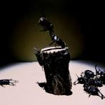 【護るため】クワカブジオラマ写真コンテスト:エントリーNO8