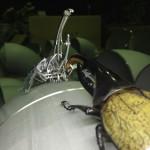 【未知との遭遇】クワカブジオラマ写真コンテスト:エントリーNO17