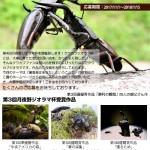 クワカブジオラマ写真コンテストの募集要項【 第4回 月夜野ジオラマ杯】