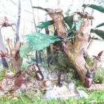【伐採】クワカブジオラマ写真コンテスト:エントリーNO7