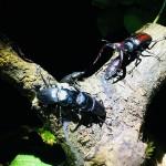 【激熱の夜】クワカブジオラマ写真コンテスト:エントリーNO9
