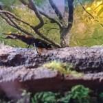 【真夏の木漏れ日】クワカブジオラマ写真コンテスト:エントリーNO3