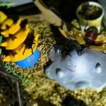 【迷子その3】クワカブジオラマ写真コンテスト:エントリーNO9