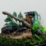 【命あふれる雑木林】クワカブジオラマ写真コンテスト:エントリーNO10