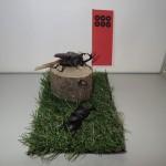 【クワガタ、カブトムシと真田丸】クワカブジオラマ写真コンテスト:エントリーNO4